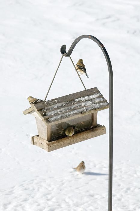 2010-02-01_feeder_snow_068a